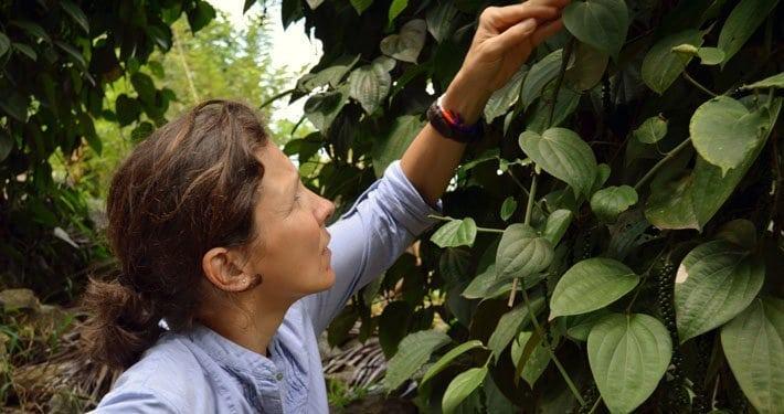 Pure Pepper   in Sri Lanka