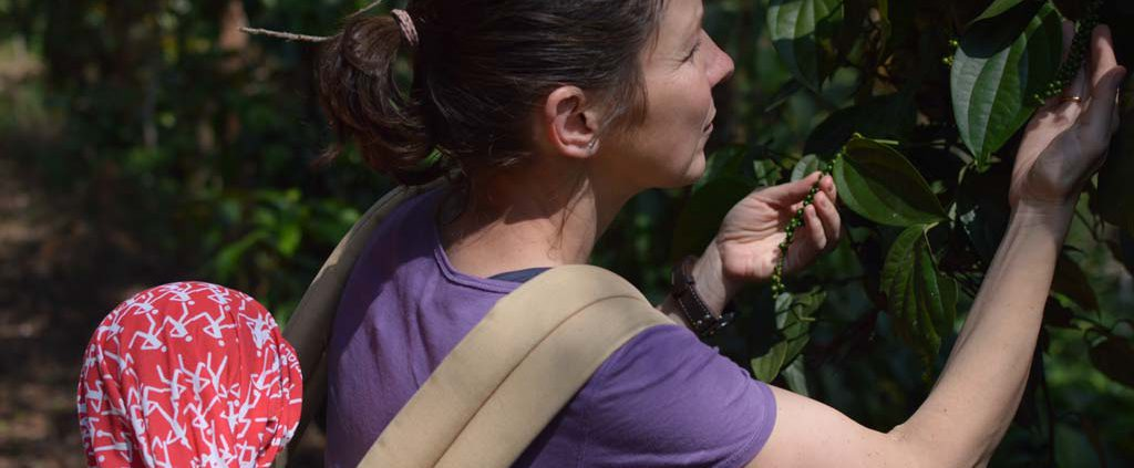 Miss Pure Pepper in Indien - woher kommt Pfeffer