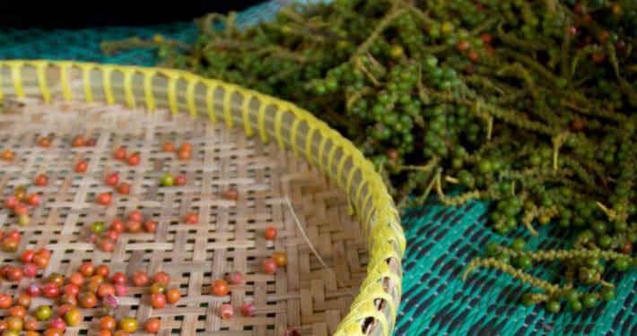 Pfeffer aus Kampot